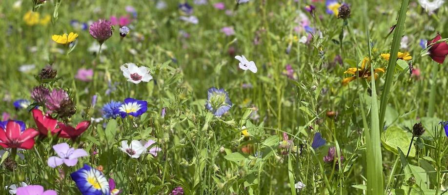 Flowers, Bloom, Coaching, Aufblühen, Flow